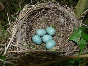 nest-B