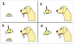 Pavlovs Hund