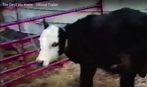 "A dying cow, contaminated by PFAS, in the documentary ""The Devil We Know"""
