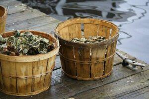 bushels of oysters