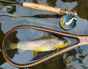 A German Brown Trout caught in Spangerbach Creek downstream of Spangdahlem NATO Airbase was found to contain a staggering 82,000 ppt of PFOS.